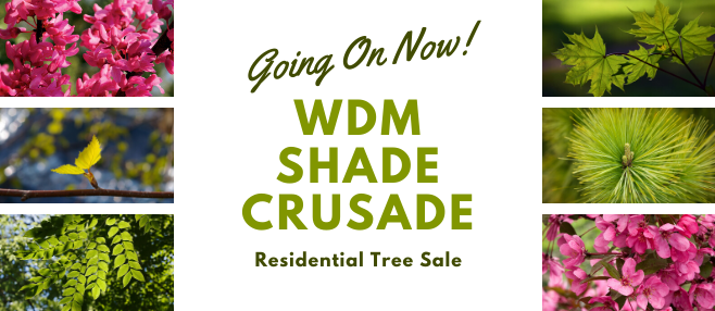 WDM Residents can purchase quality trees for $30 each